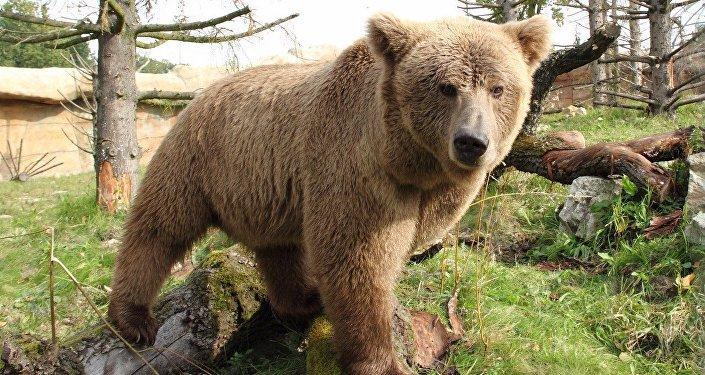 Urso (imagem referencial)