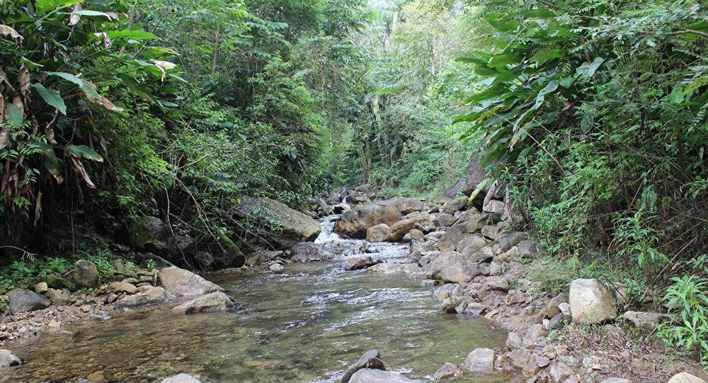 Rio em trecho da Mata Atlântica fotografado em Santa Catarina.