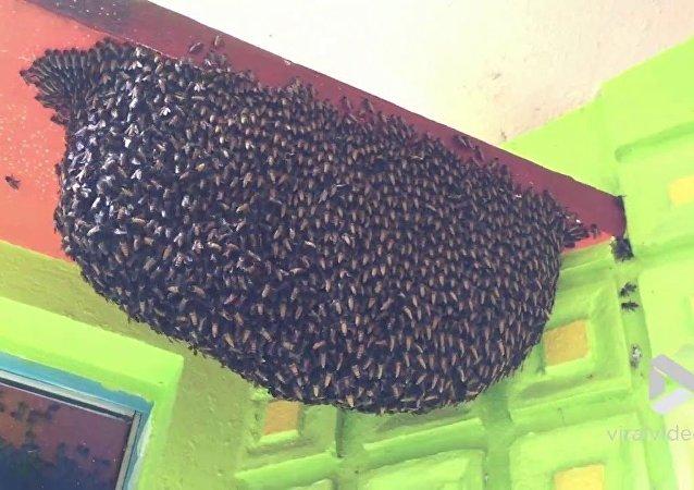 Abelhas criam sistema de defesa em torno de favo de mel