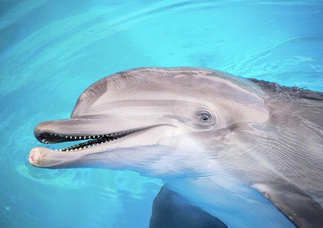 Golfinho (imagem referencial)