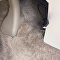 Cobra aparece dentro de carro em movimento