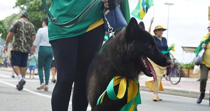 Cão com fitas coloridas verde e amarelo durante protesto favorável a Jair Bolsonaro.