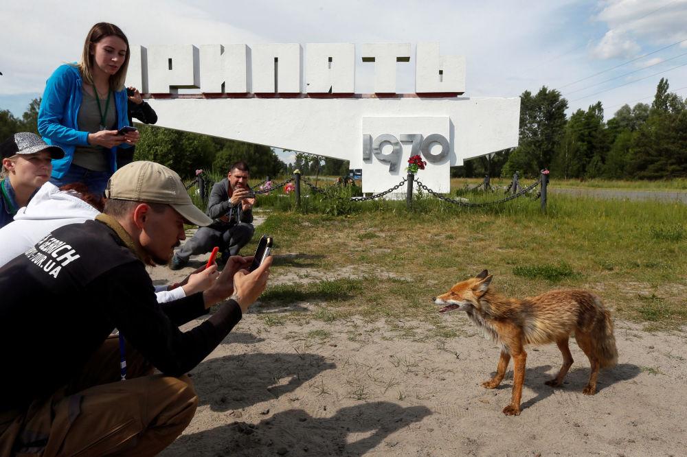 Visitantes tiram fotos de uma raposa na cidade abandonada de Pripyat, perto da usina nuclear de Chernobyl, na Ucrânia, 2 de junho de 2019