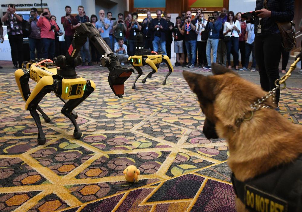 Cão K9 e robô Spot durante a conferência da Amazon, em Las Vegas, EUA