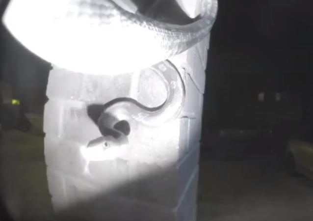 'Alguém em casa?': cobra comprida toca campainha de residência nos EUA