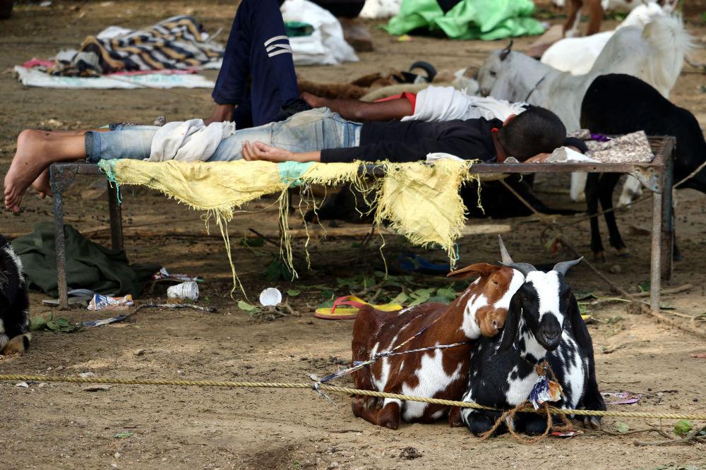 Cabras no mercado de rua aberto na véspera das celebrações muçulmanas da Festa do Sacrifício na cidade de Ajmer, no estado indiano de Rajastão
