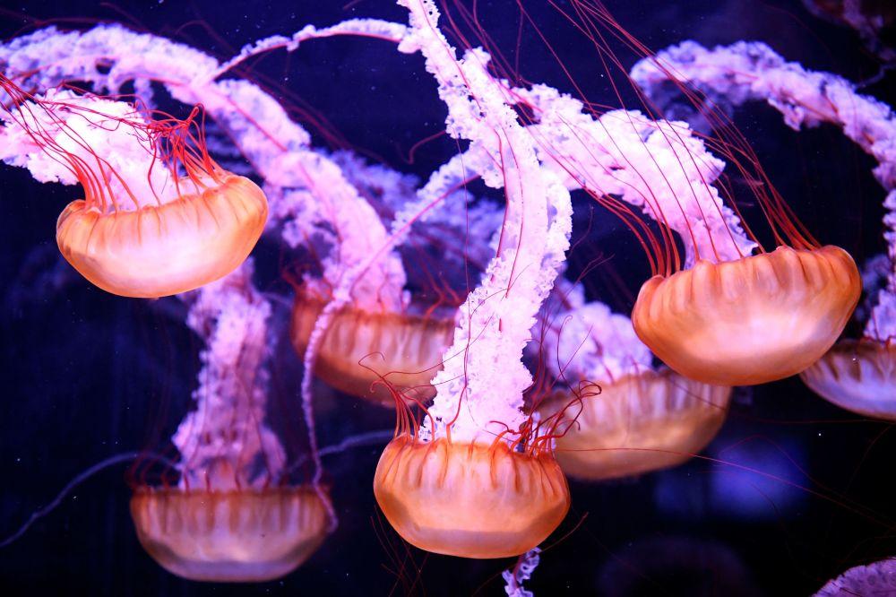 Medusas no aquário de Paris