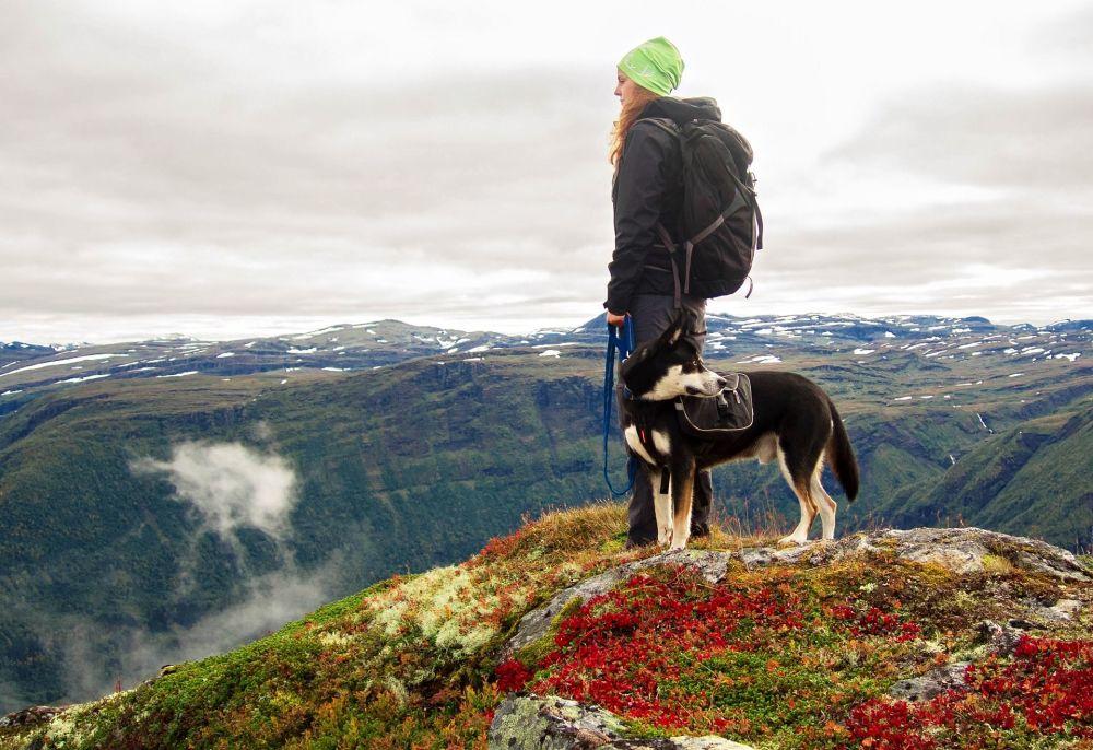 Turista com cachorro nas montanhas da Noruega