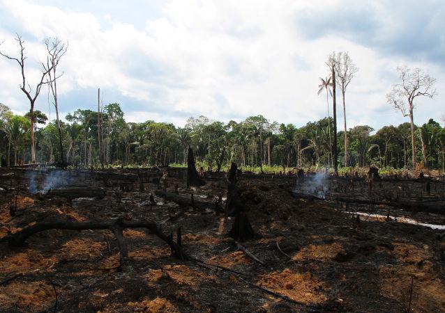 Queimada é vista em área de plantação próximo à praia de Lábrea (AM), no início da tarde desta sexta-feira, 06/09/2019