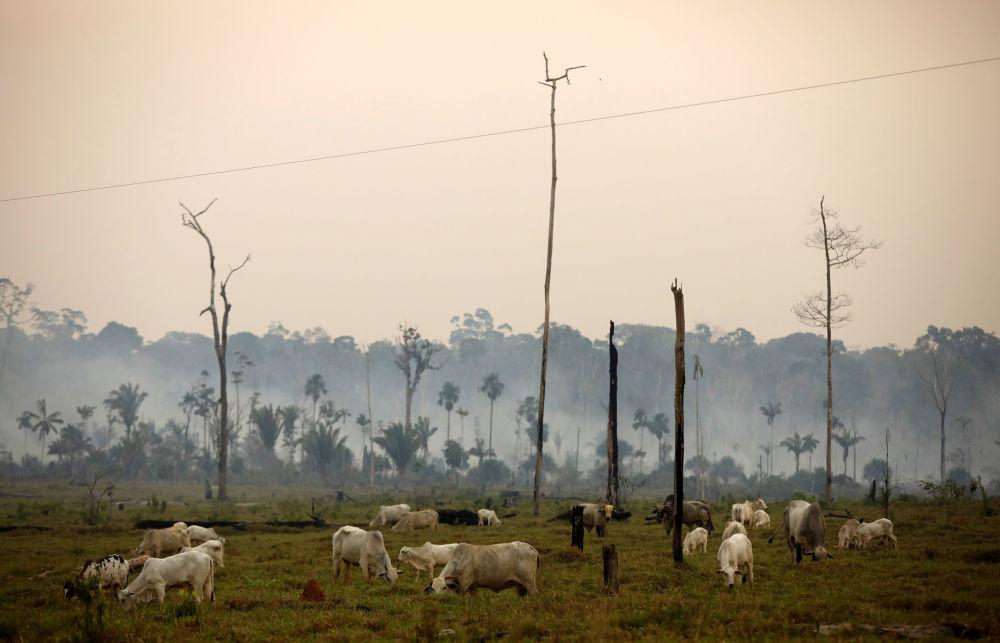 Visão aérea de uma área desmatada na Floresta Nacional Bom Futuro, no estado de Rondônia, Brasil, 12 de setembro de 2019