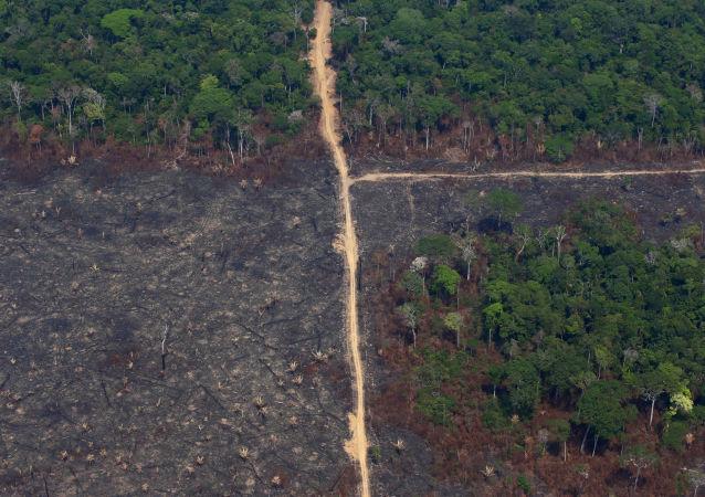 Lote queimado é visto na Floresta Nacional de Jamanxim na Amazônia, no estado do Pará, Brasil, 11 de setembro de 2019