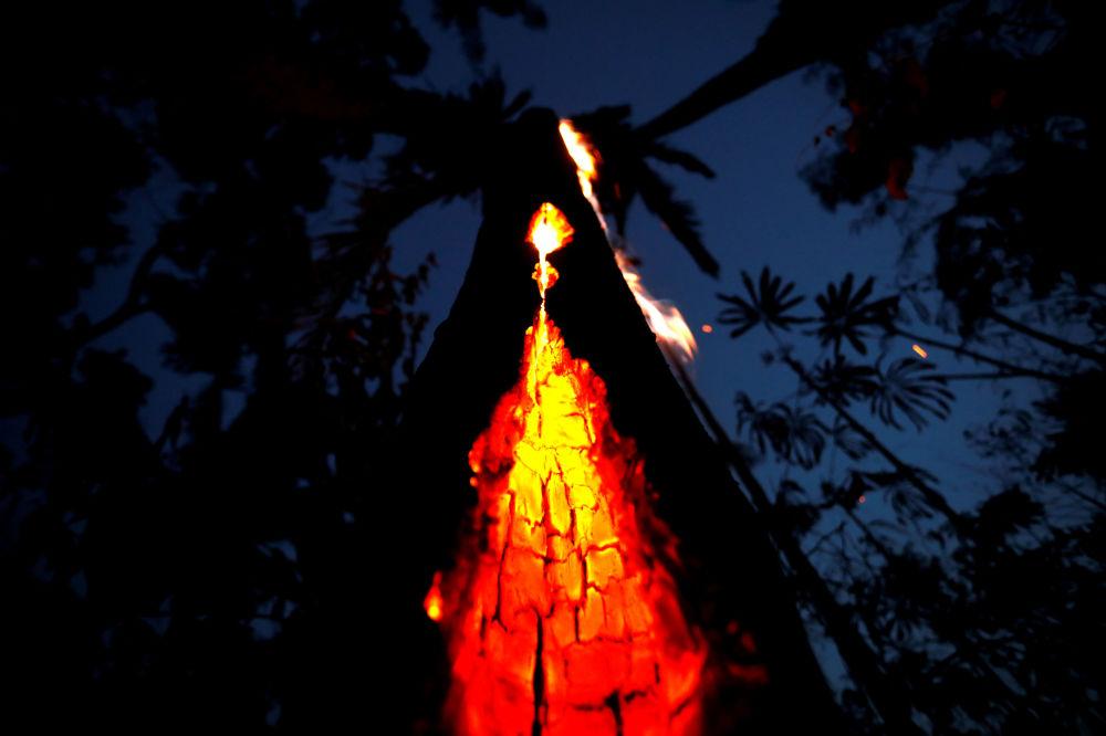 Árvore em chamas é vista durante incêndio em área da Floresta Amazônica em Itapuã do Oeste, no estado de Rondônia, Brasil, 11 de setembro de 2019