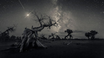 Foto feita pelo fotógrafo chinês Wang Zheng, que ganhou o 1º lugar na categoria Skyscapes, no concurso Insight Investment Astronomy Photographer of the Year 2019, exibe árvores secas na Mongólia