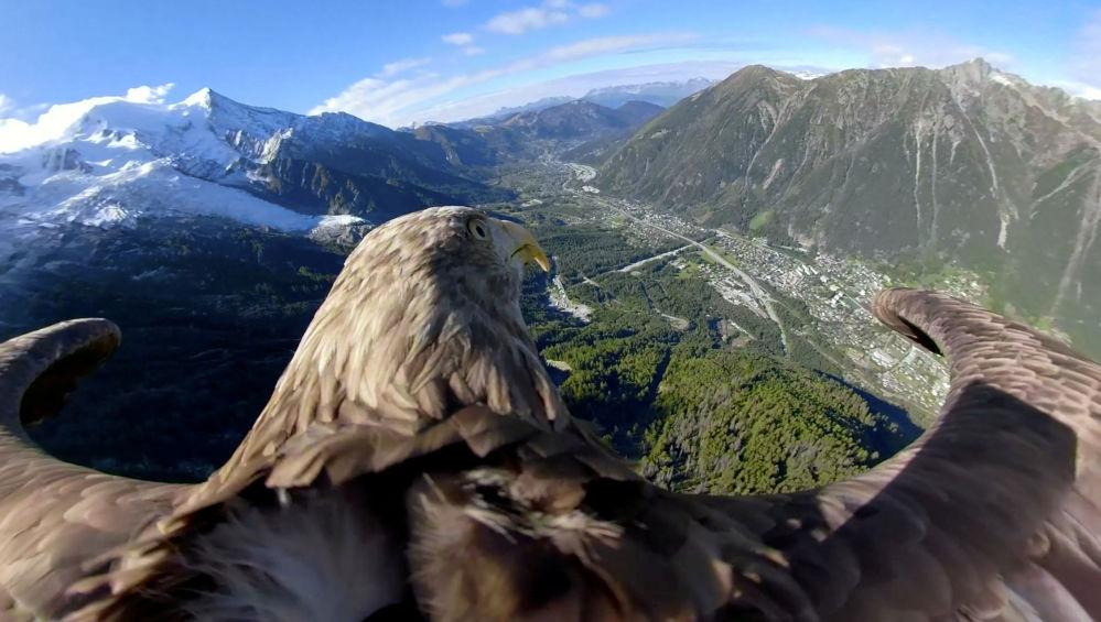 Victor, uma águia de 9 anos equipada com câmara, sobrevoa geleiras e montanhas de Chamonix, na França, durante preparações para um voo sobre os Alpes com objetivo de ampliar o conhecimento sobre o aquecimento global