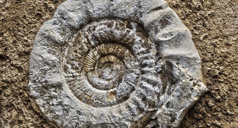 Fóssil de um amonite (imagem referencial)