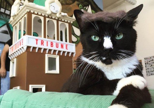 Gato parecido com Trump