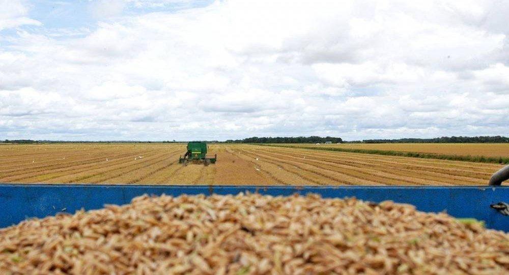 Colheita de grãos no Vale do Araguaia, Tocantins