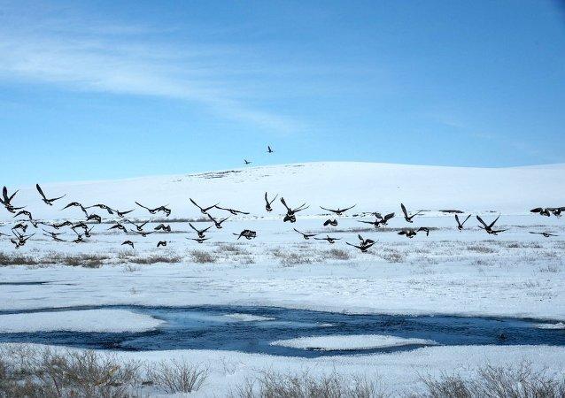 Alasca, EUA