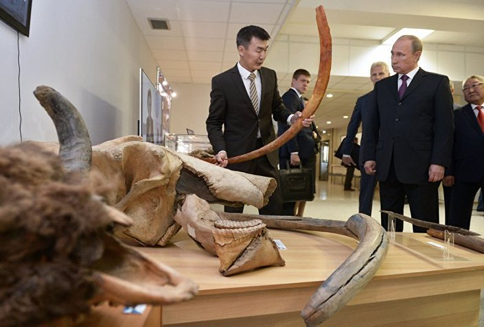 Presidente da Rússia, Vladimir Putin, discute com cientistas o problema da clonagem de animais extintos durante visita ao Museu Lazarev do Mamute em setembro de 2014.
