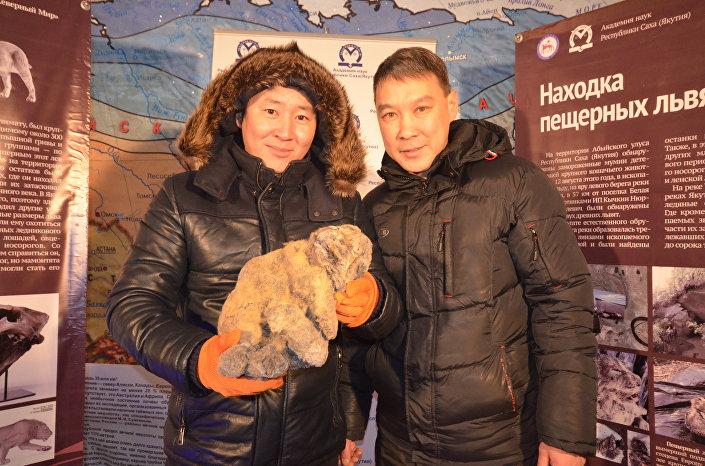 Cientistas com filhotes congelados de leão-das-cavernas encontrados na Rússia
