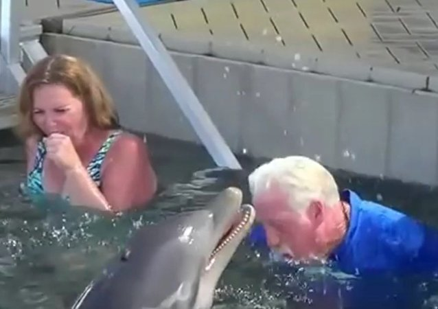 Encontro com golfinhos muito fofo