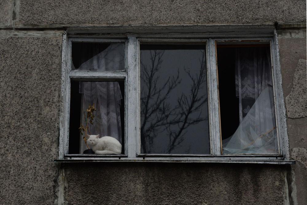 Gato em Debaltsevo