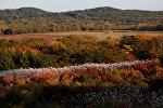 Outono na região russa de Primorie