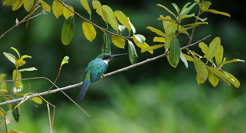 Imagem do Catálogo Taxonômico da Fauna Brasileira