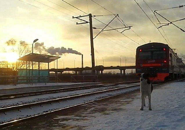Agente da força especial Lince foi atropelado por trem após resgatar cachorro da linha férrea de Moscou