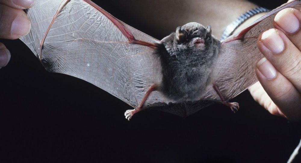 Morcego-de-peluche