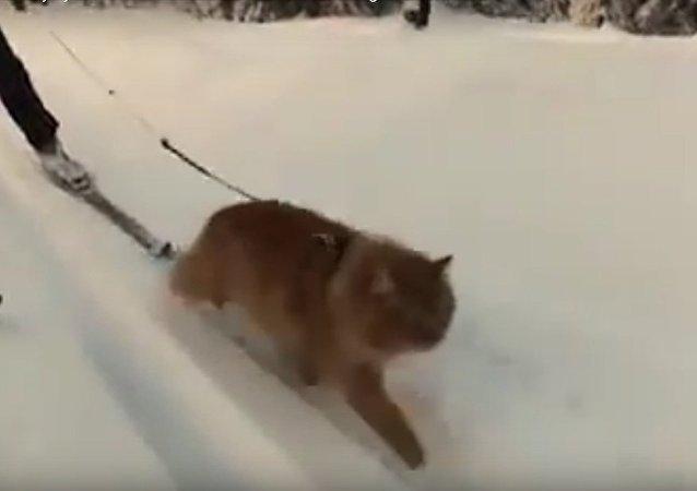 Quem disse que um gato não pode agir como um cão?