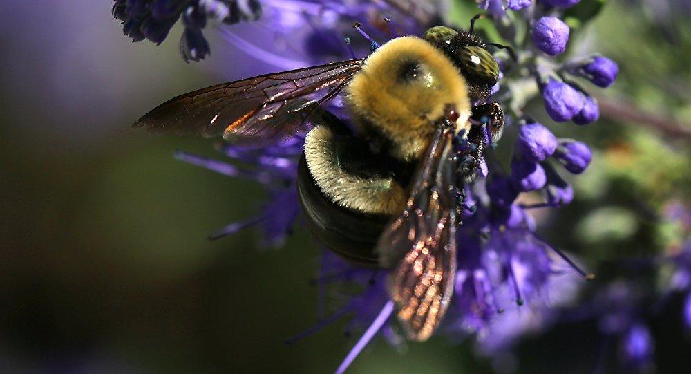 Centro de cuidado de abelhas americano Bayer, foto de arquivo 15 de setembro 2015