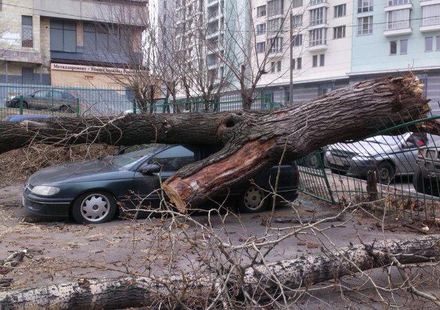 Um árvore e um carro