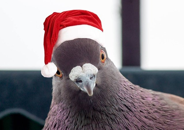 A Pomba (vestida para o Natal)