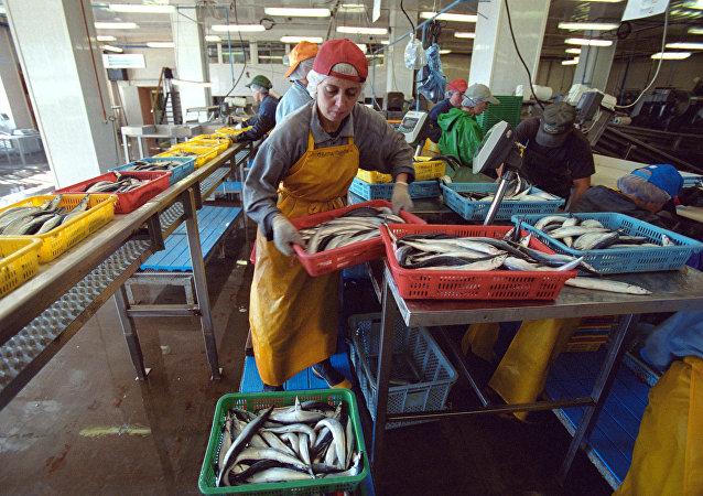 Funcionários na fábrica de peixe, ilha Shikotan, região de Sacalina, Rússia (foto de arquivo)