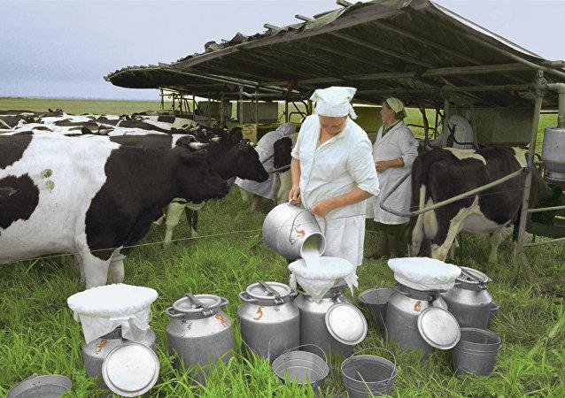 Trabalhadoras da fazenda de produção de laticínios, Rússia (foto de arquivo)