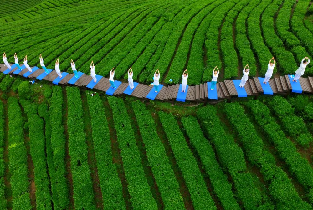 As pessoas executam yoga em um parque da cultura do chá para promover o chá lá, na cidade de Enshi, na província de Hubei (China), 24 de abril de 2016