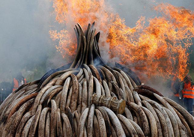 Queima de marfim no Quênia