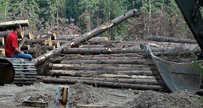 Desmatamento na floresta