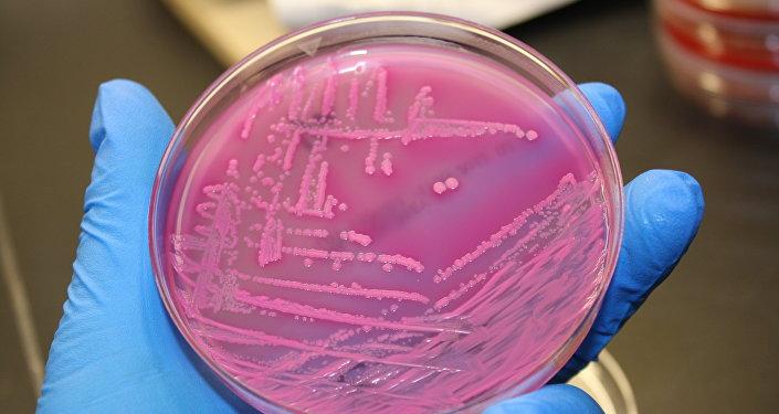 a bactéria E. coli (imagem referencial)