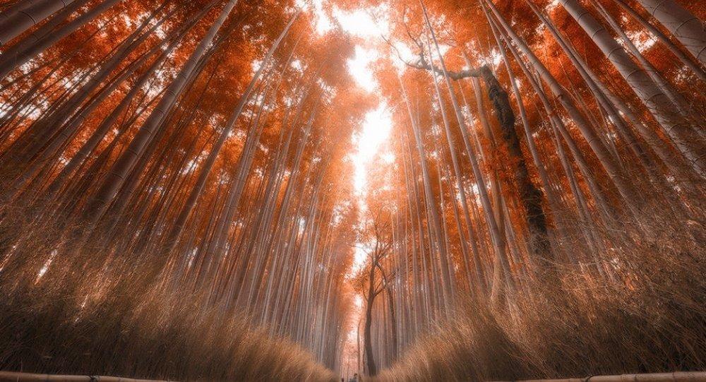 Floresta no Japão