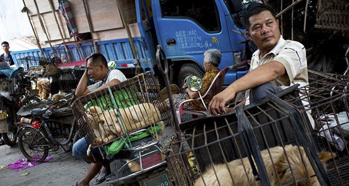 Matadouros de cachorros na China