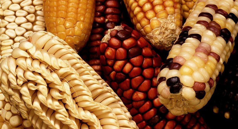 Alimentos geneticamente modificados