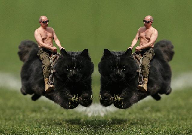 Meme com o gato enlouquecido