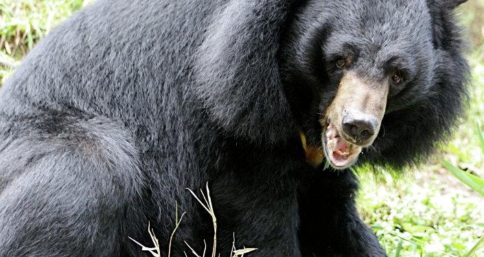 Um urso