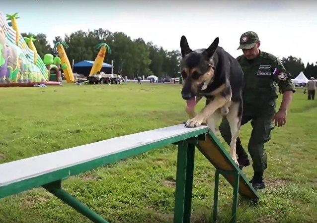 O verdadeiro amigo: cães militares e seus tratadores nos Jogos Militares