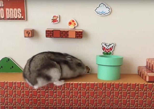 Japonês cria Super Mario real para seu animal de estimação