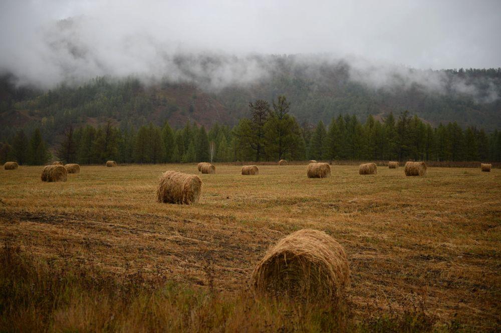 Região de Altai