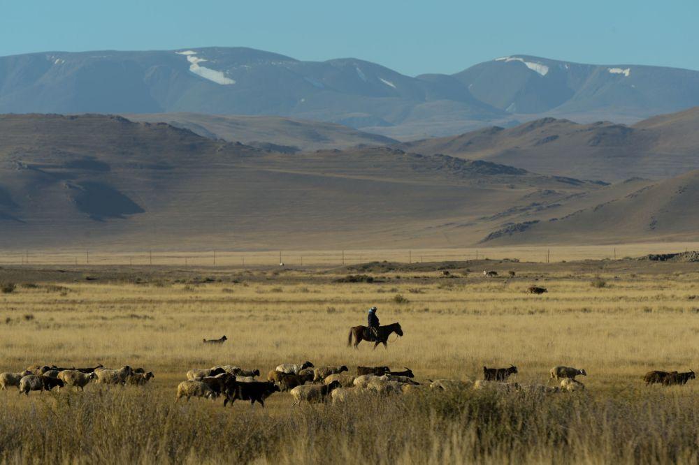 A região de Altai é particularmente popular entre visitantes. Eles ainda têm a oportunidade de ver acampamentos tradicionais de nômades que lá abitam