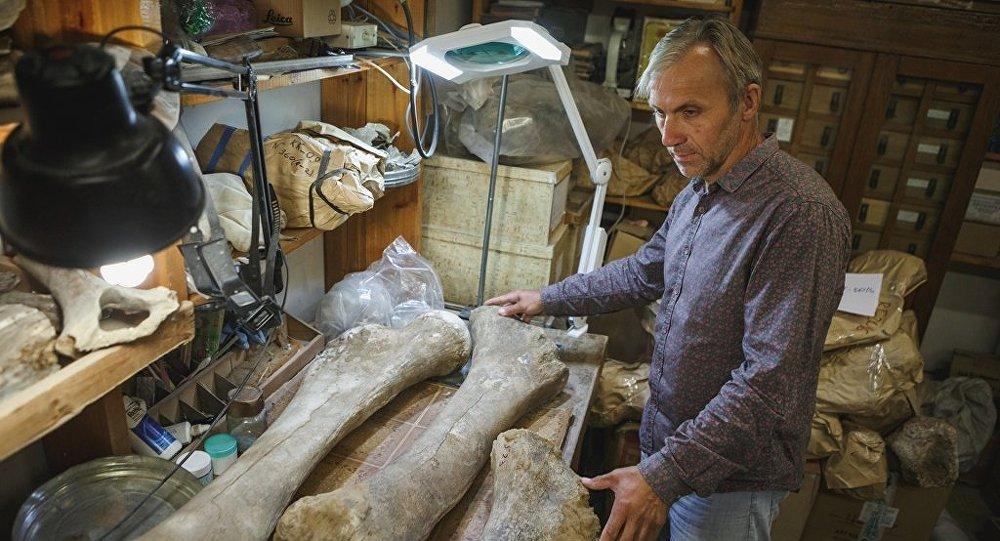 Cientista da Universidade Estatal de Tomsk Sergei Leschinsky examinando ossos de mamute